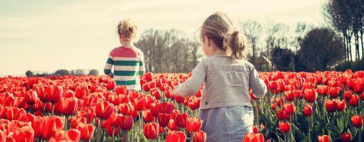 פרחי שיעורים
