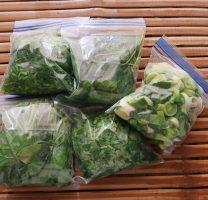 עצלני בשלני – הקפאת ירוקים